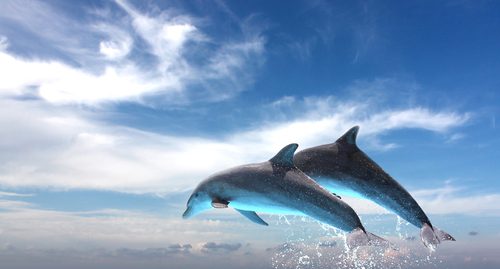 Dream like picture of Two Dolphins jumping out of water