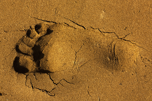 Foot Print in Sand