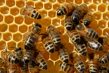 BEEHIVE DREAM - What does a dream about a Beehive Mean?