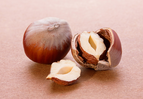 Picture of Hazel Nuts. Dream Symbol.
