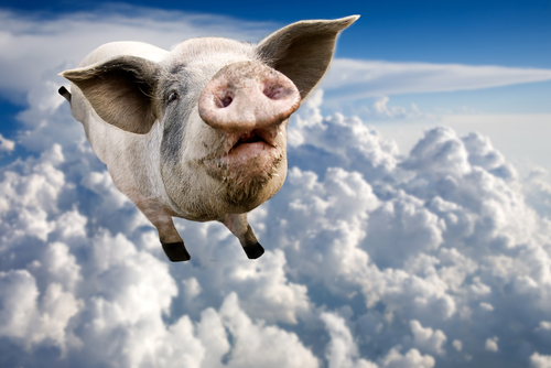 Picture of Flying Pig. Dream Symbol.