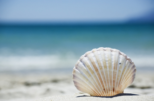 Shell by Sea